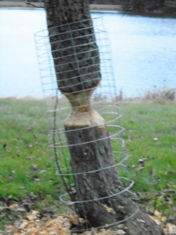 kramer tree 2